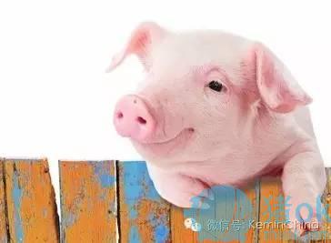 <a href=/http://aliaproject.com/zbfz/zbfz/>保育猪气喘病</a>