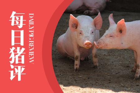 每日猪价分析 第一时间掌握猪价动态