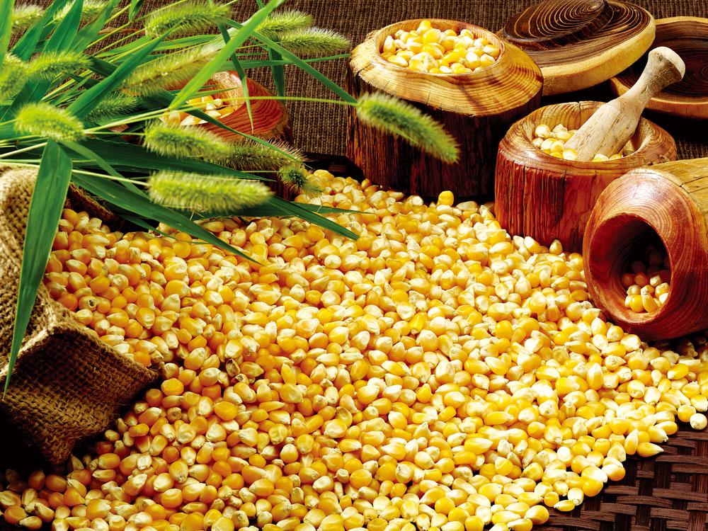 今日豆粕价格:7月20日全国豆粕bwin必赢网址